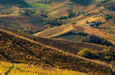 Grappa Single Vineyard